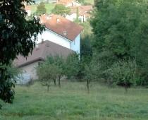 Caprioli a due passi dall' abitato di questa piccola borgata la Morana in Villar Perosa.