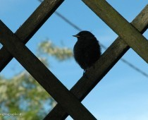 Quasi quasi mi faccio uno spuntino, dice il piccolo uccello fissando la piccola formica che ha davanti a se. Guardate bene…