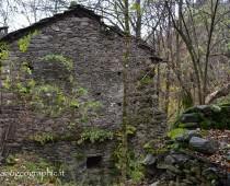 Case abbandonate immerse nella vegetazione