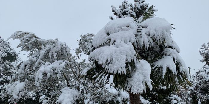 Oro Bianco: Finalmente La Neve!